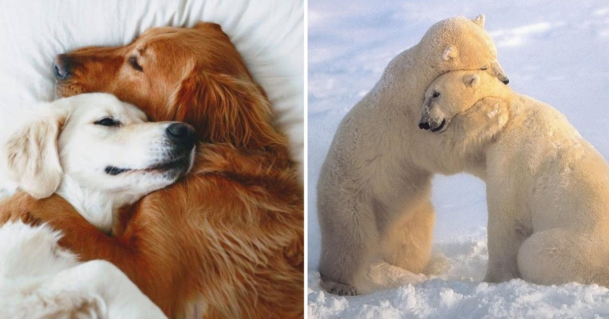 aghhhhh.jpg?resize=1200,630 - These Pictures of Animals That Hug Are Guaranteed To Brighten Your Day