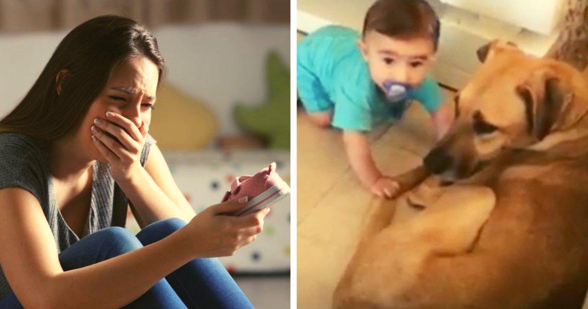articulosportadas 32.png?resize=412,275 - Recién Nacido Pierde La Vida Luego De Ser Atacado Por Un Perro