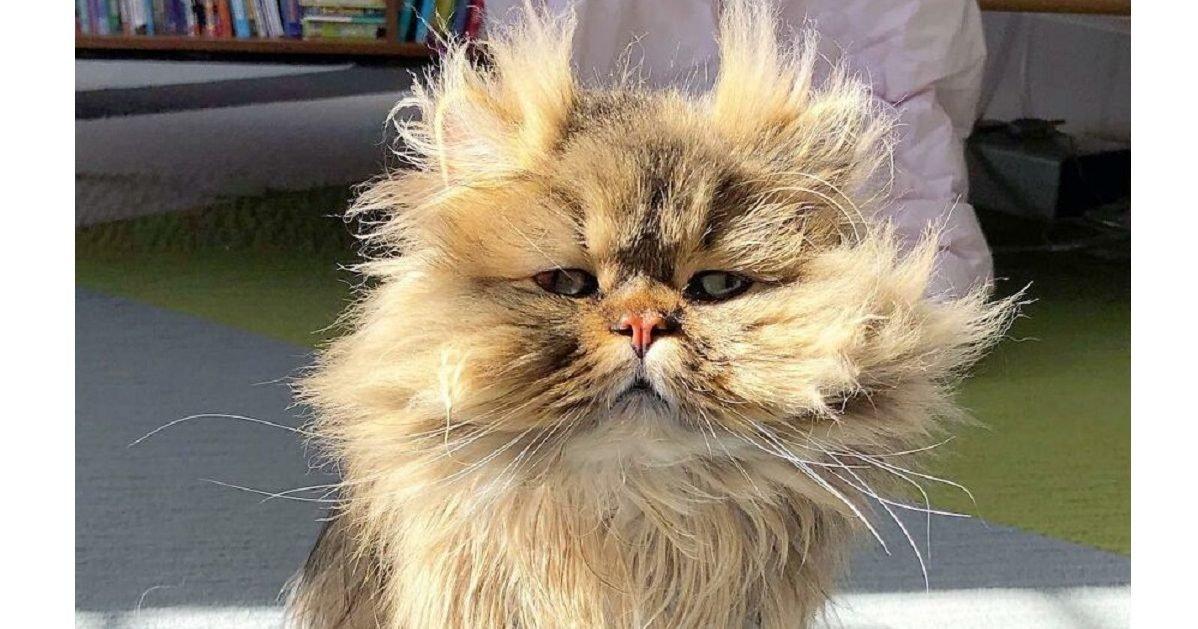 barnaby persian instagram post e1611943687539.jpg?resize=412,232 - Voici Barnaby, le chat qui a toujours l'air de se réveiller de mauvais poil