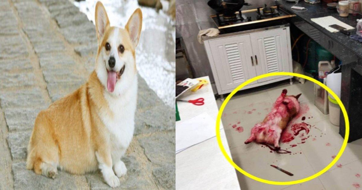 blood dog.png?resize=412,275 - 包丁の横に血を流して倒れたウェルシュ・コーギー、ここに隠された不埒な真実は!?