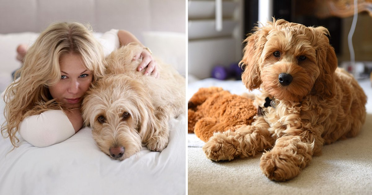 errr 3.jpg?resize=1200,630 - New Law Brings An End To Landlords Banning Tenants From Having Pets