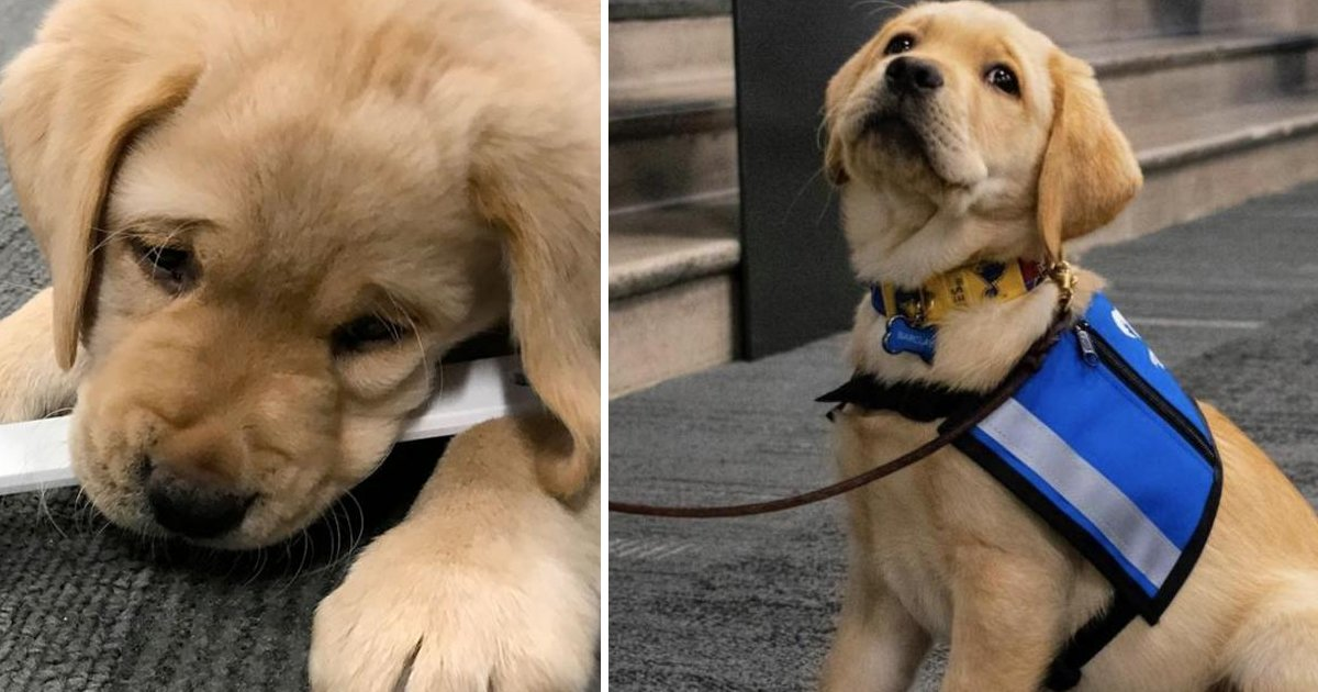 errttbbb.jpg?resize=1200,630 - What To Do When You're Suffering From Puppy Blues | A Useful Guide