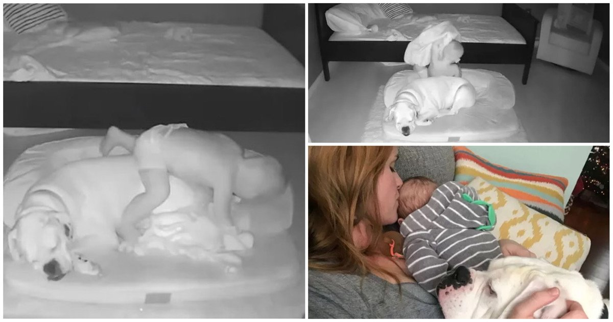 f783fdbe a2c8 4618 a870 69d9b580cfff.jpeg?resize=412,232 - 매일 밤에 몰래 '댕댕이'한테 다가가서 '이런' 행동해서 엄마 놀래킨 아기 (영상)
