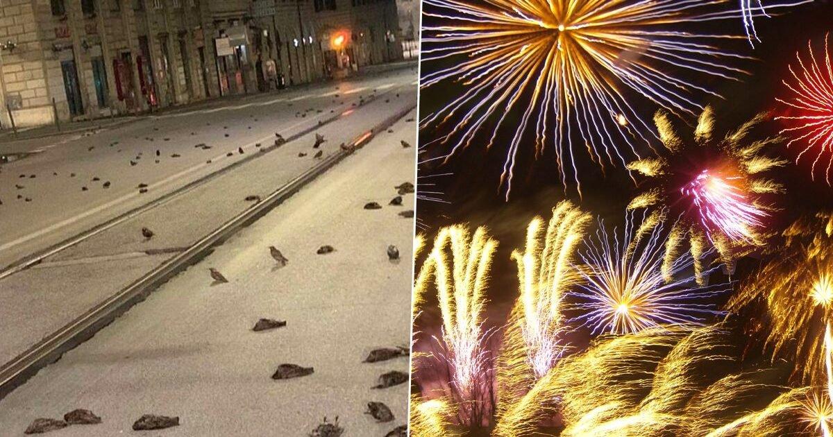 fireworks e1609649726491.jpg?resize=1200,630 - Rome : les feux d'artifice du Nouvel An tuent des centaines d'oiseaux