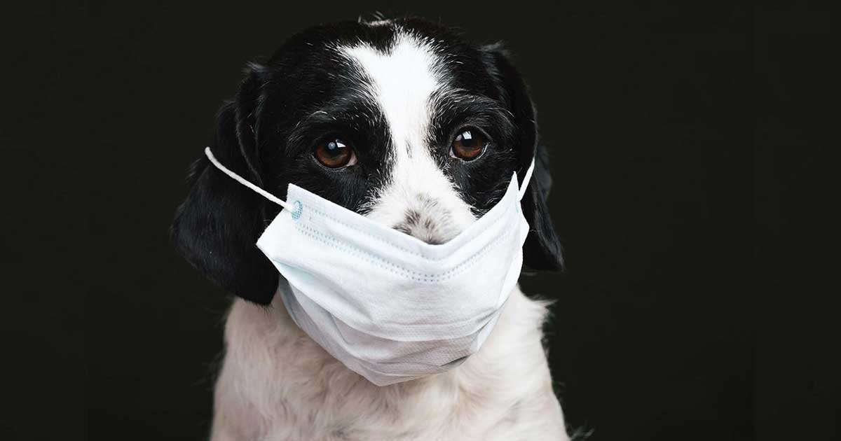 formatfactorycovid pets 72 1.jpg?resize=412,232 - Researchers Say Cats And Dogs May Need Their Own Covid Vaccine