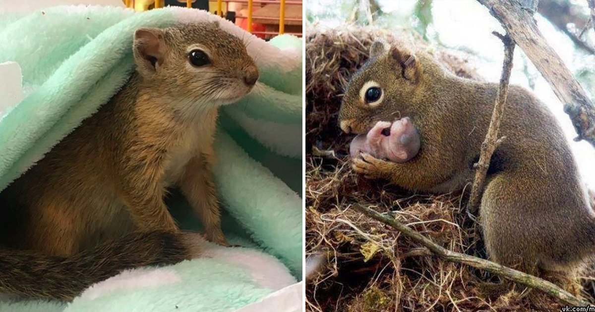 gagag.jpg?resize=412,232 - This Pregnant Squirrel Knew Exactly Where To Go To Have Her Baby
