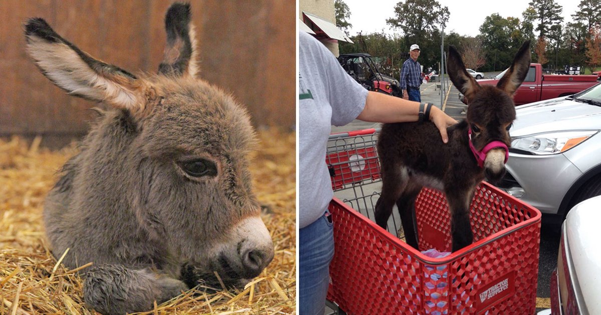 gsgsg.jpg?resize=412,232 - These Adorable Clicks Of Baby Donkeys Have The Power To Melt All Hearts