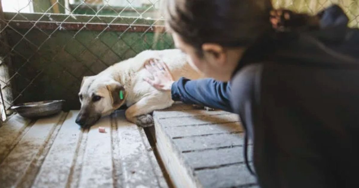 gtt.jpg?resize=1200,630 - Hundreds Of Puppies Bought During Lockdown Are Now Being Taken To Animal Shelters, Disowning Them