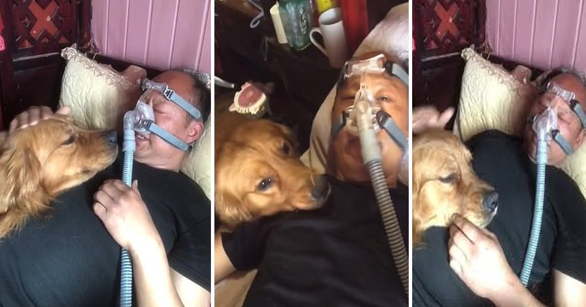 sdfsdffff.jpg?resize=1200,630 - Loyal Dog Refuses To Leave & Watches Over Owner Who Wears Ventilator To Sleep