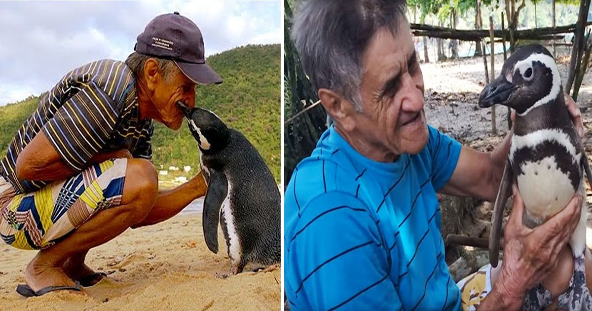 sdgshhh.jpg?resize=1200,630 - Penguin Swims 5000 Miles Each Year To Reunite With Man Who Saved His Life
