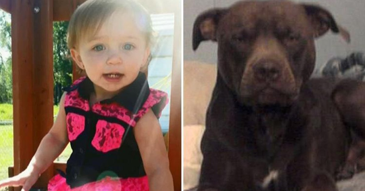 shshhhh.jpg?resize=412,232 - 1-year-old Girl Dies After Being Attacked By Pet Pit Bull