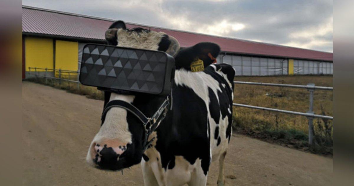 titulo 17 1.png?resize=1200,630 - Hombre Le Coloca A Sus Vacas Lentes De Realidad Virtual Para Reducir Su Ansiedad Y Aumentar La Producción De Leche
