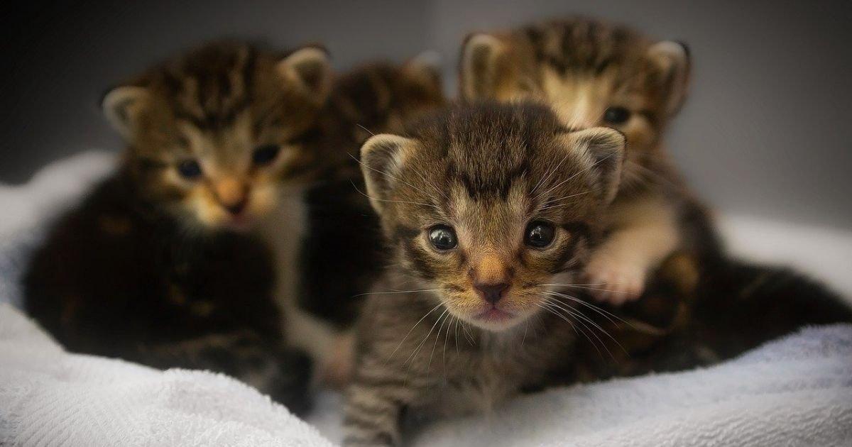 vonjour4 1.jpg?resize=1200,630 - Un homme condamné à trois mois de prison avec sursis pour avoir tué trois chatons