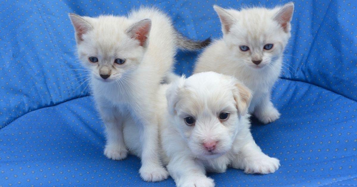 vonjour4 3.jpg?resize=1200,630 - La vente de chiens et de chats dans les animaleries va être interdite