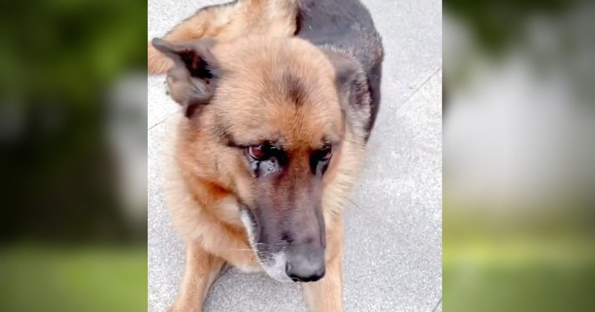 wangwang4.jpg?resize=412,232 - Retired Police Dog Cries After Reuniting With Her Handler She Has Not Seen For Many Years