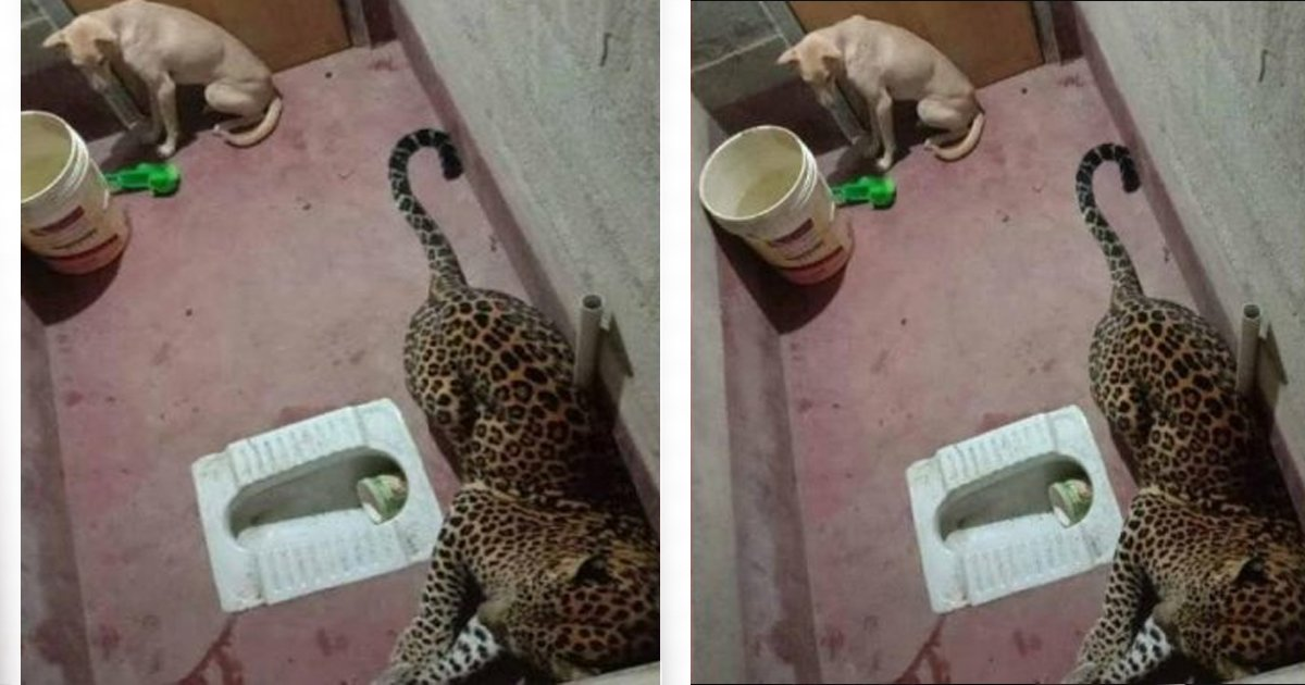 1 151.jpg?resize=1200,630 - Encierran A Un Perro Junto A Un Leopardo Por 7 Horas Y El Resultado Sorprende A Los Rescatistas