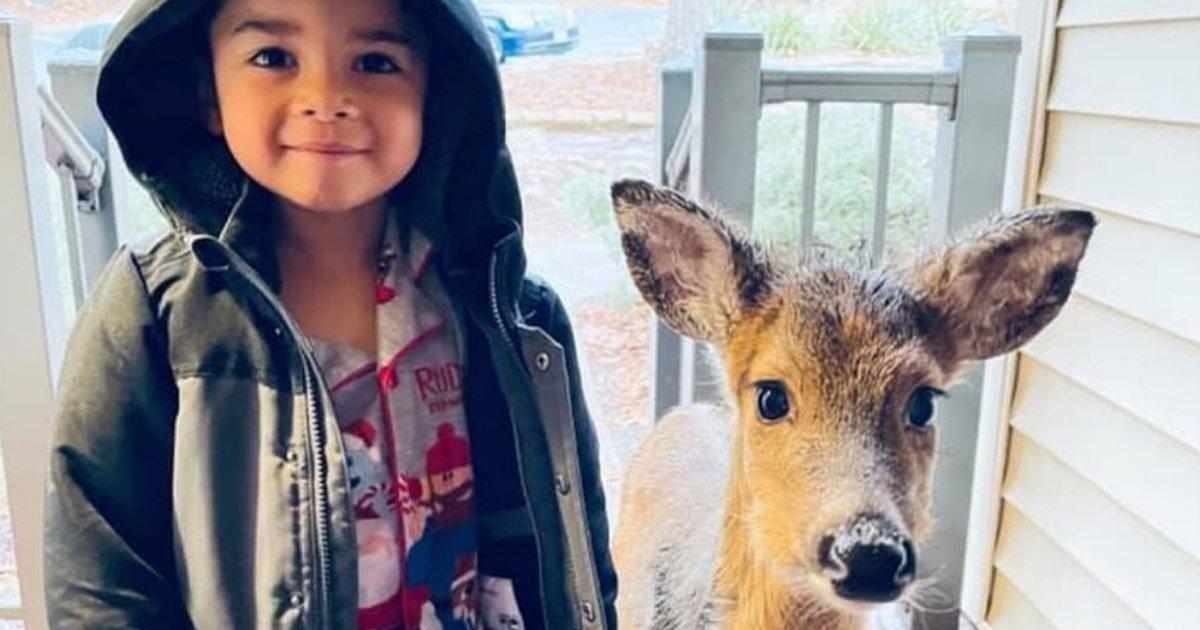 1 25.jpg?resize=1200,630 - Niño De 4 Años Sale A Pasear Y Regresa A Casa Con Un Venado Como Mascota