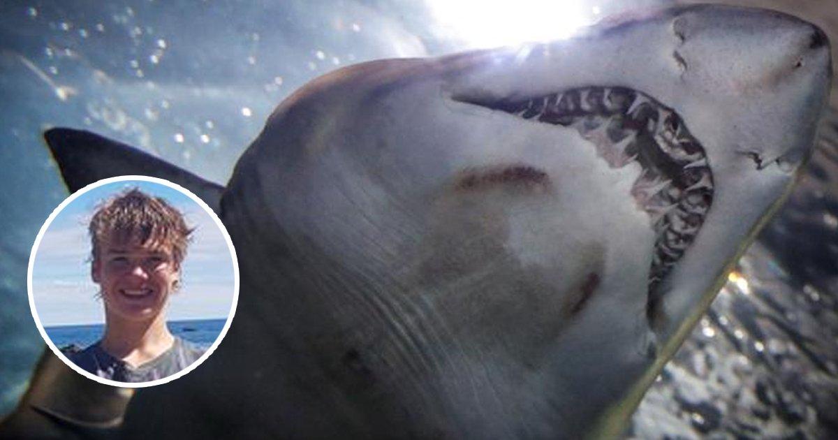 1 42.jpg?resize=1200,630 - El Angustiante Video En El Que Un Tiburon Casi Le Arranca La Mano A Un Joven Mientras Pescaba Y Lo Arrastra Al Agua