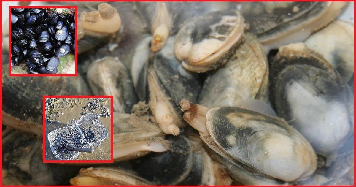 14 coqui 1.jpg?resize=412,232 - Gironde: tous les coquillages du bassin d'Arcachon sont interdits à la consommation