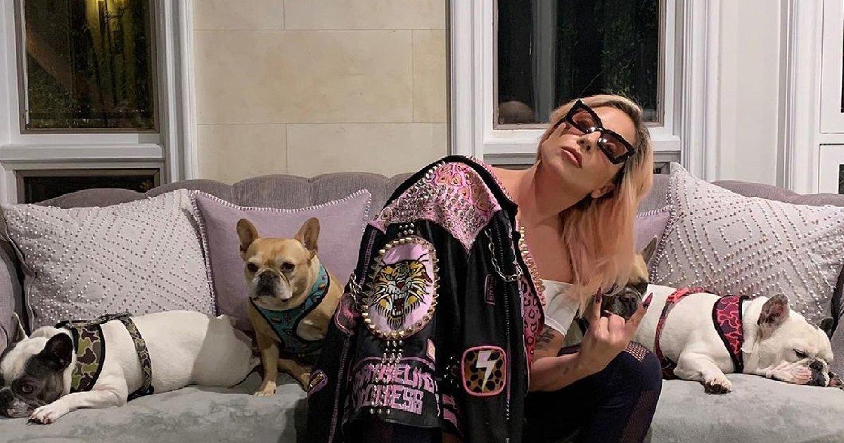 2 lg.jpg?resize=1200,630 - Lady Gaga offre une grosse récompense à celui qui l'aidera à retrouver ses chiens
