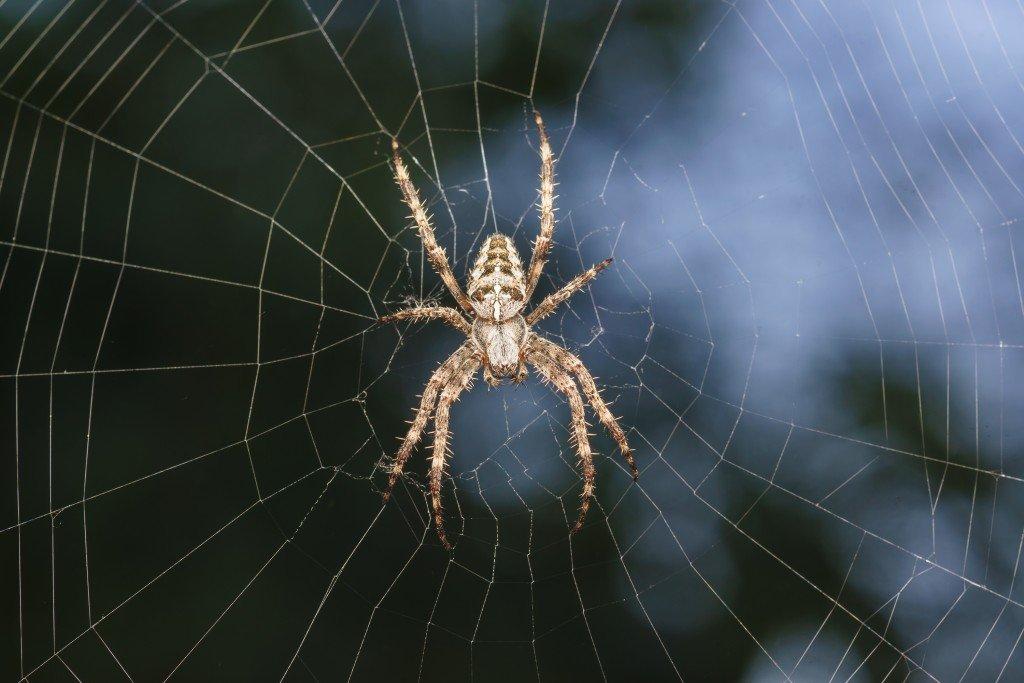 10 cosas que debes saber sobre las arañas - Desinfestados