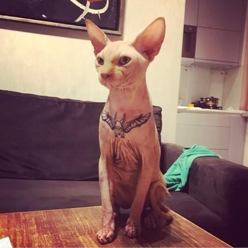 """Esta chica tatuó a su gato """"para hacerlo más glamoroso"""""""