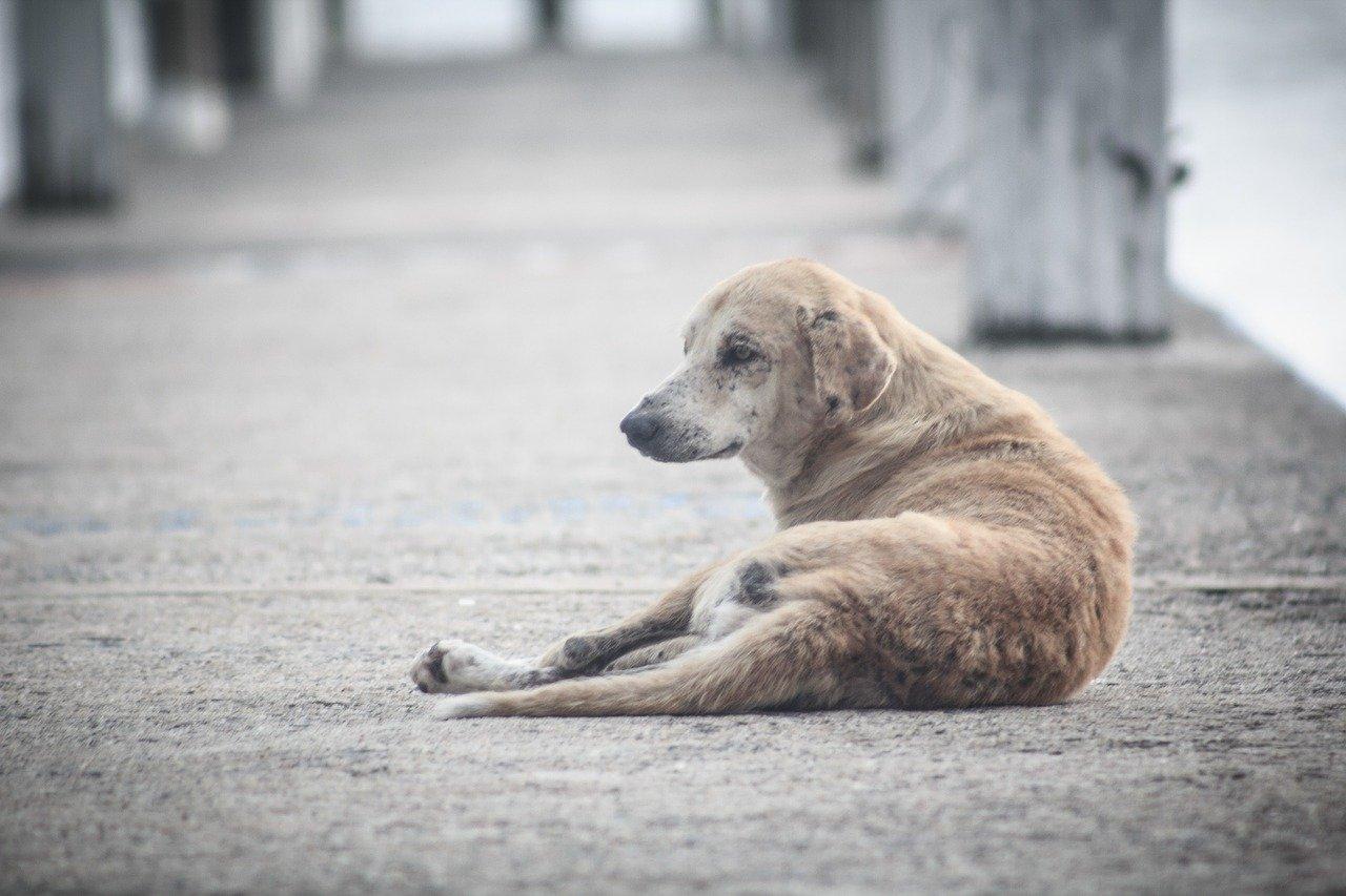 Video: la historia de Chéster, el perro al que todos ignoraban - Diario El  Sol. Mendoza, Argentina.