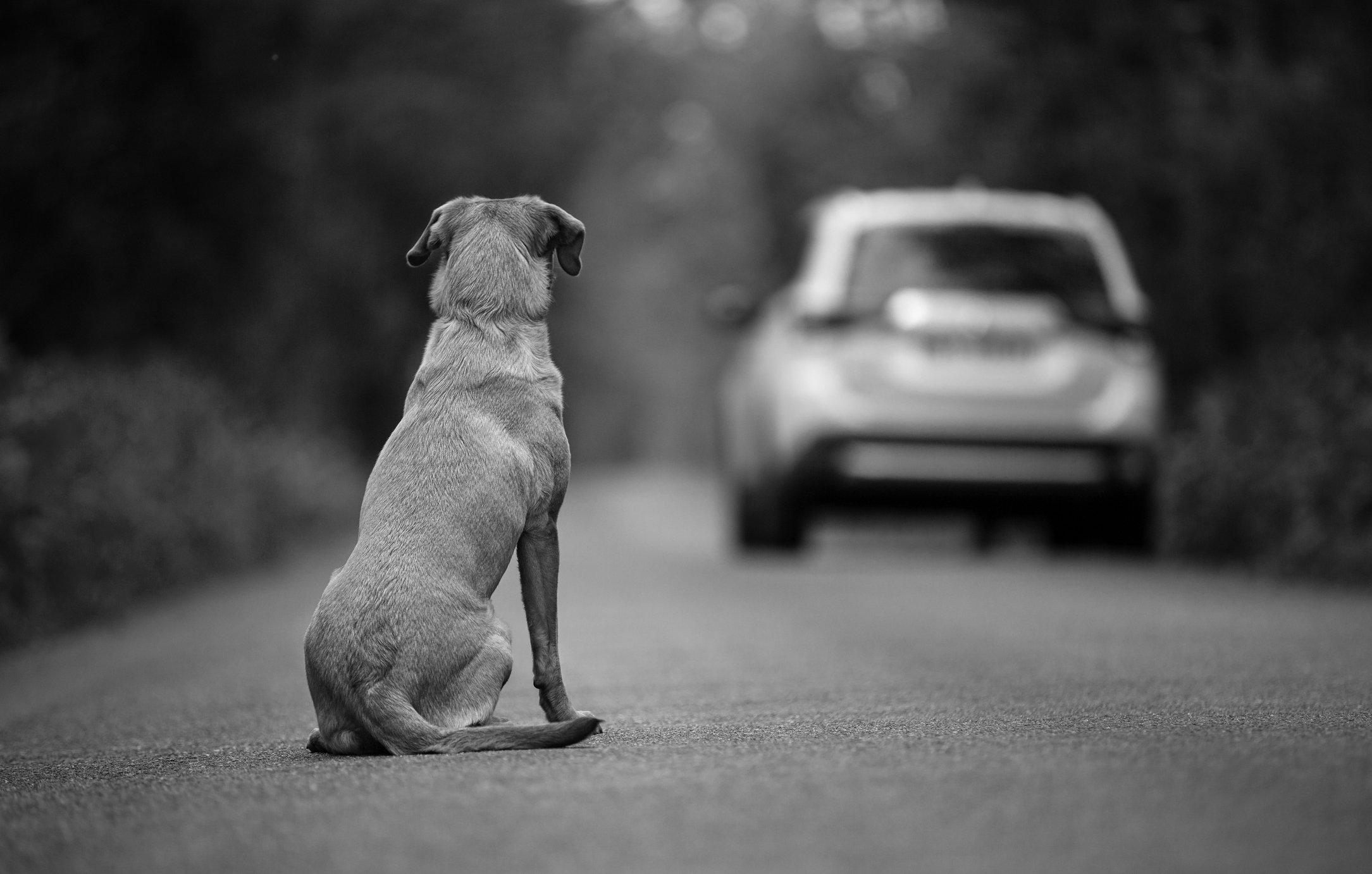 Cuidado, estas son las seis carreteras con más perros abandonados | Motor -  ComputerHoy.com