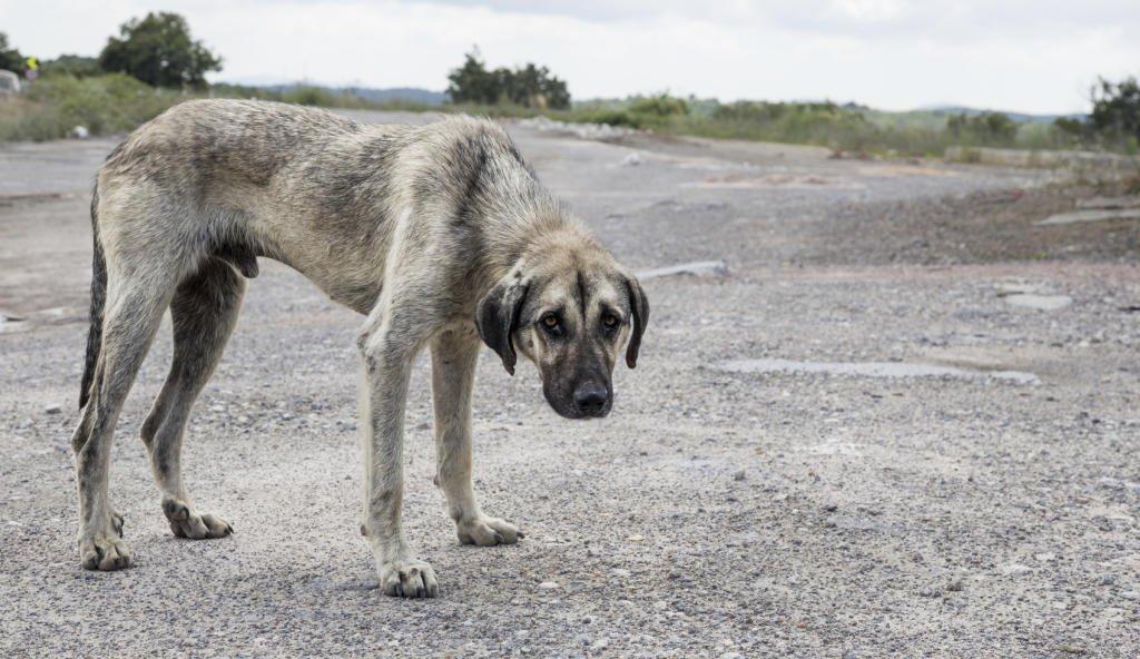 Qué hacer si me encuentro un perro abandonado? - La Opinión de Murcia