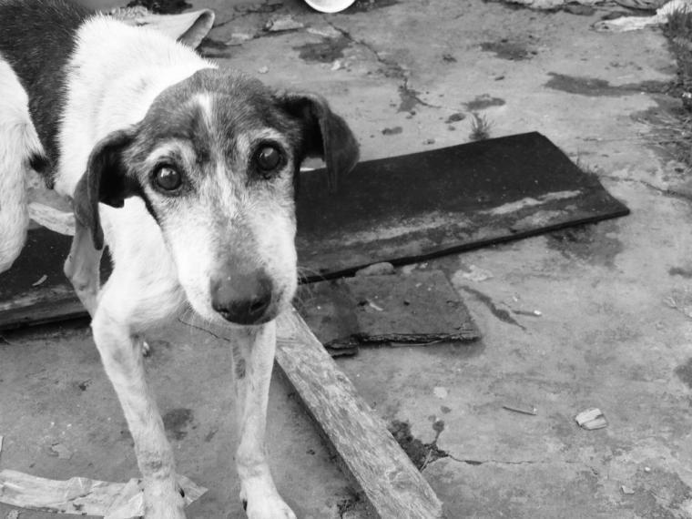 Qué debo hacer si me encuentro un perro abandonado?