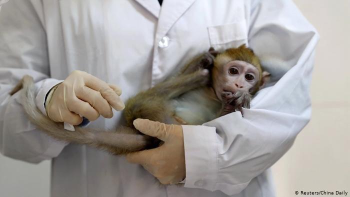 China Schanghai geklonter Affe