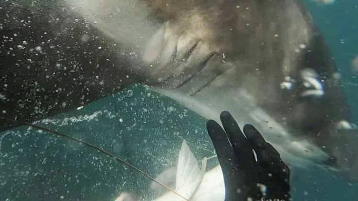 Resultado de imagen de Jahmon Wilson shark