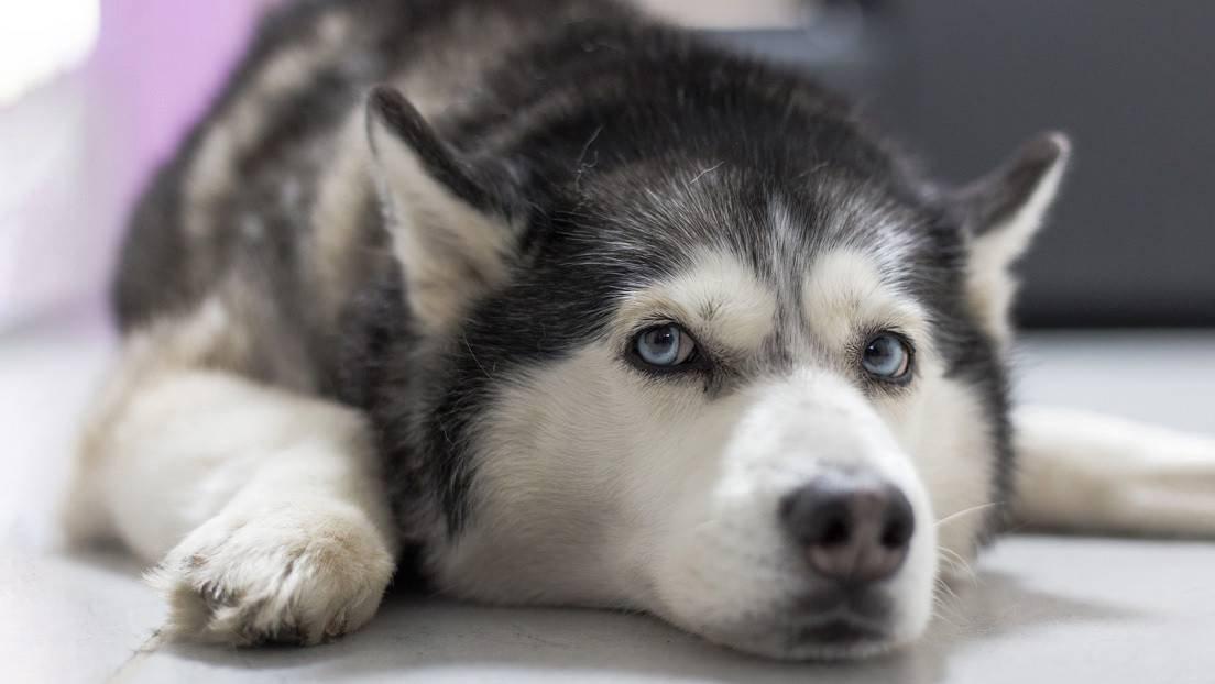 Resultado de imagen de dueño de una joyería simula un asalto para poner a prueba a su perro