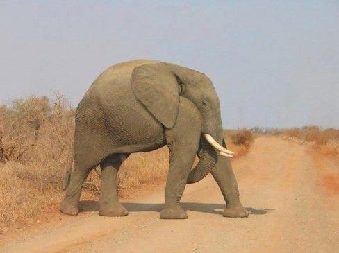 animals without necks