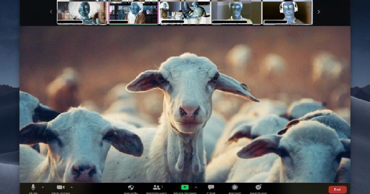 7 zoom.jpg?resize=1200,630 - En louant ses chèvres pour des réunions Zoom, une fermière fait un carton dans le monde entier