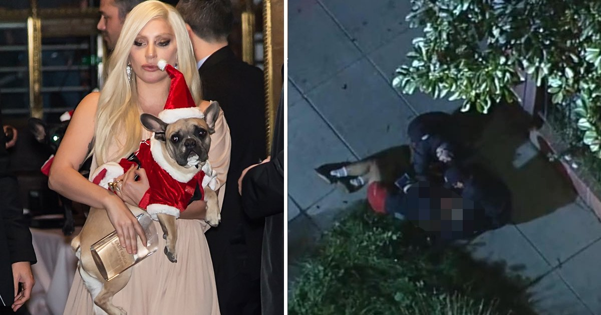 agggag.jpg?resize=1200,630 - Lady Gaga's Dog Walker Shot 4 Times In Chest By 'Hollywood Dognappers'