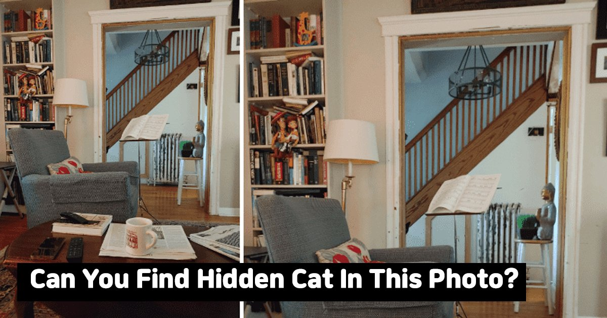 agggga.jpg?resize=1200,630 - Can You Find The Cat Hidden In This Viral Picture?