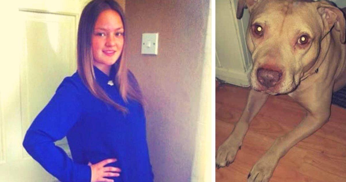 articulosportadas 1 32.png?resize=1200,630 - Mujer Pierde La Vida Luego De Que Un Perro Le Arrancara El Brazo De Un Mordisco