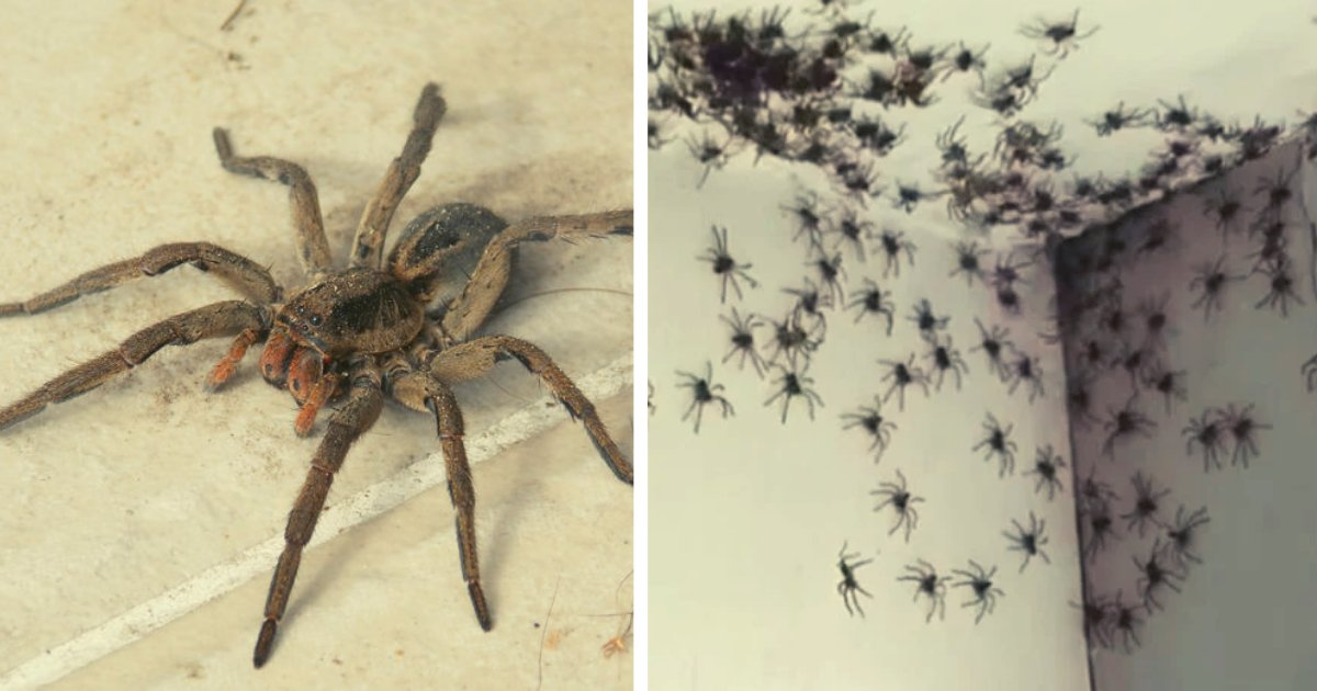 articulosportadas 3.png?resize=1200,630 - Descubrió Un Nido De Arañas En La Habitación De Su Hija Y Las Dejó Allí