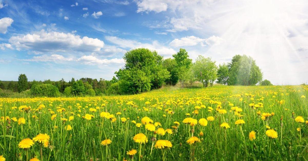 dictionnaire e1613477910387.jpg?resize=1200,630 - Après la vague de froid, le printemps s'installe déjà dans tout le pays