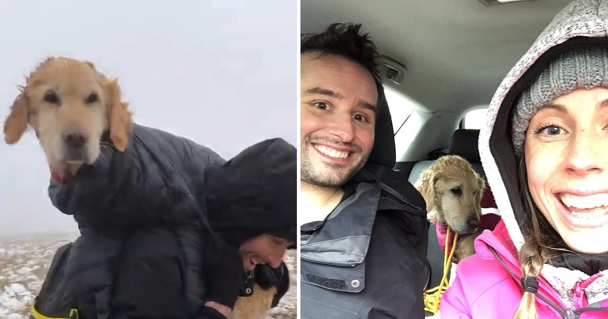 erreee.jpg?resize=1200,630 - Heroic Couple Who Rescued 'Freezing Dog' Reported To Police For Breaching Lockdown