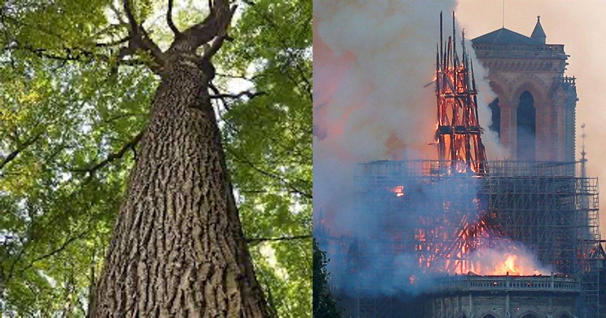 fleche notre dame.png?resize=1200,630 - Notre-Dame de Paris : la flèche sera reconstruite à l'identique avec des chênes centenaires