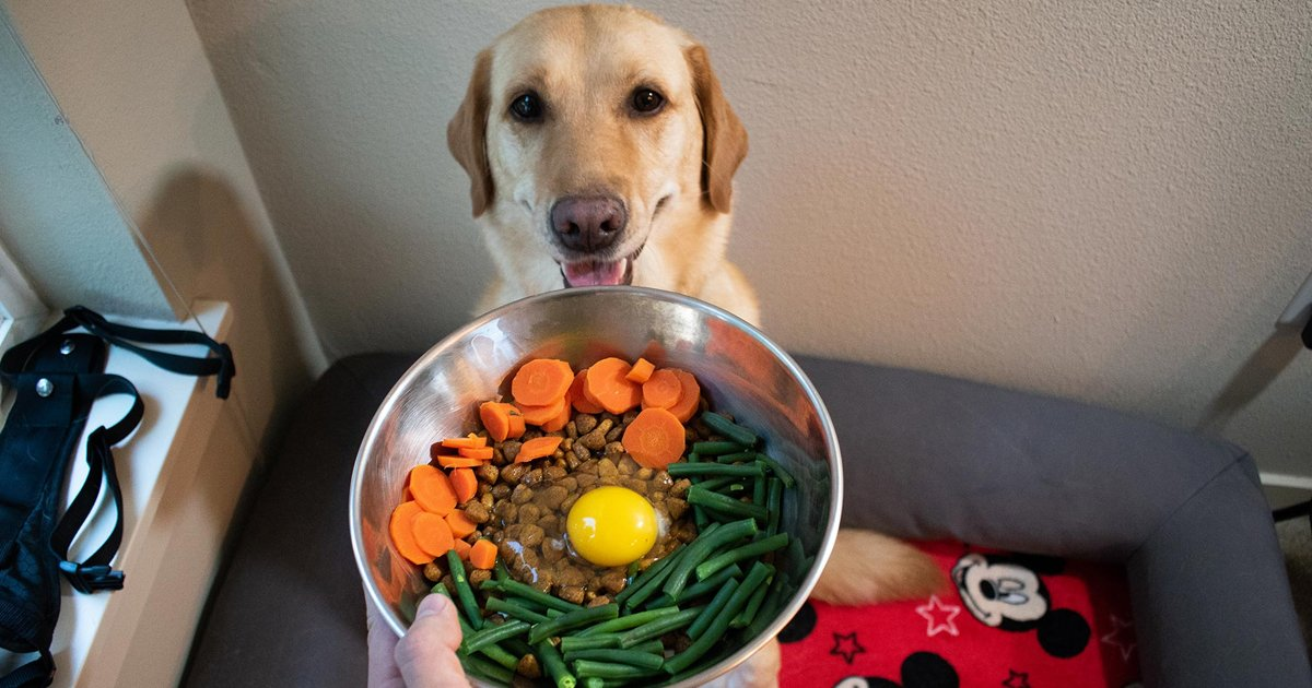 gssgsgg.jpg?resize=412,275 - Can Dogs Eat Eggs | Here's Everything You Need To Know About Your Pet's Diet