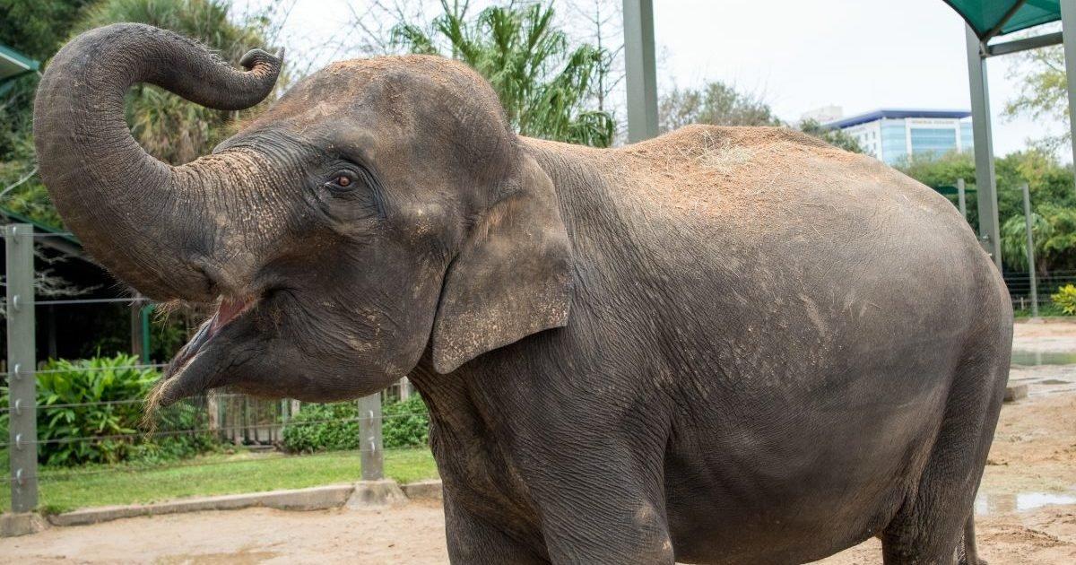 houston zoo e1614353062248.jpg?resize=1200,630 - Espagne : D'un coup de trompe, un éléphant tue un gardien de zoo