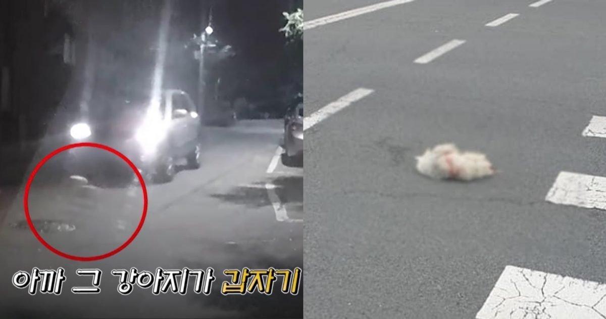 "kakaotalk 20210226 163100746 e1614324704247.jpg?resize=412,275 - ""운전 중에 강아지가 차 앞으로 뛰어든다면?""...어떻게 해야 할까요?(+영상)"