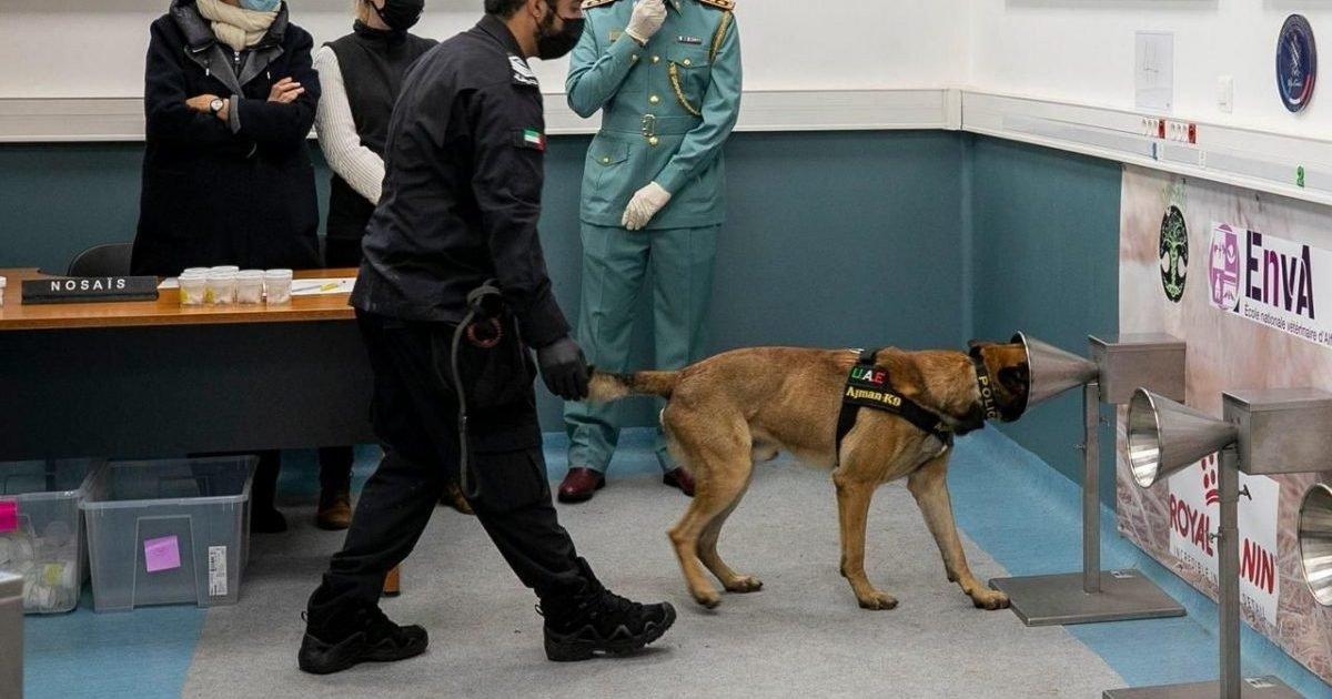 le parisien e1613648154736.jpg?resize=1200,630 - Covid-19 : Des chiens pourraient-ils détecter le virus ?