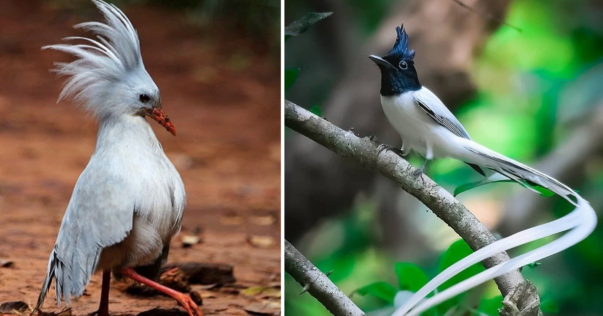 sfsfggg.jpg?resize=1200,630 - A Closer Look At Some Of The Rarest Birds In The World