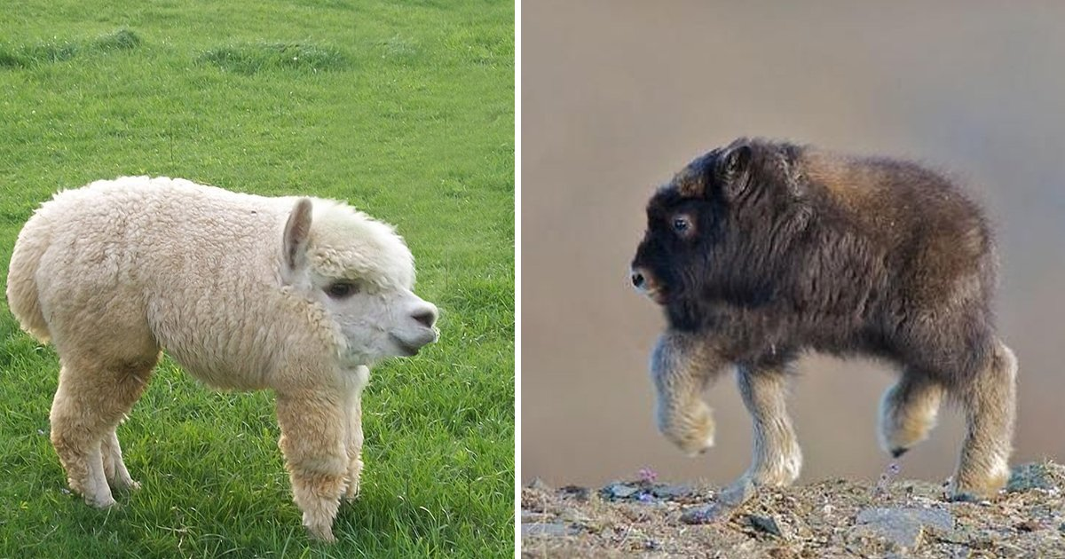 sgsgsgsg.jpg?resize=412,275 - These Brilliant Photos Display What Animals Without Necks Look Like