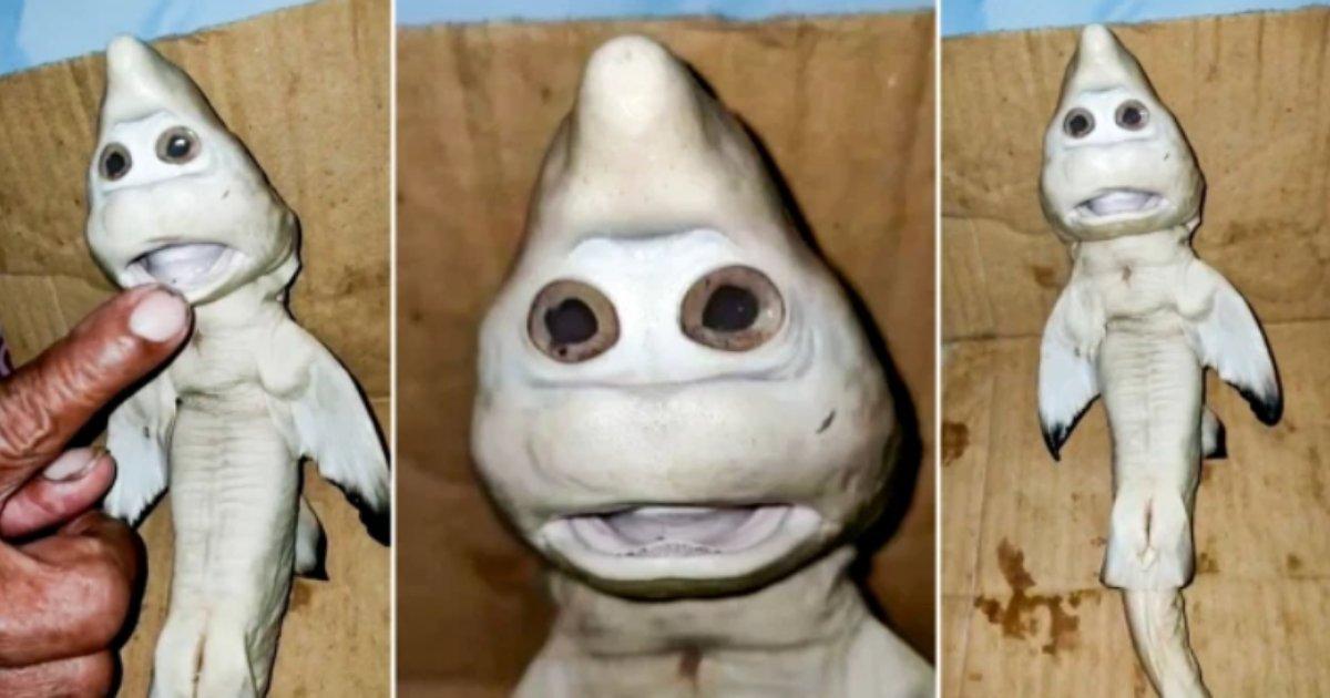 titulo 18 2.png?resize=1200,630 - Descubren Un Bebé Tiburón Con Rostro Humano Y Fue Cortado Del Estomago De La Madre