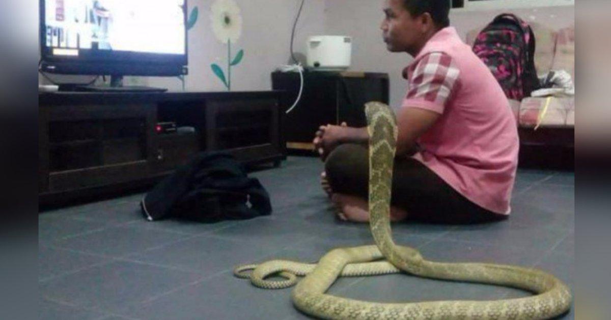 titulo 2.png?resize=1200,630 - Hombre Vive Con Una Serpiente Cobra Que Cree Que Es Su Novia Reencarnada
